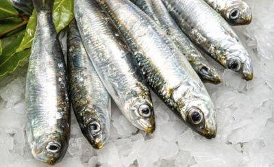 sardinha mini