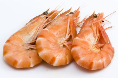 Background photo of three fresh isolated shrimps